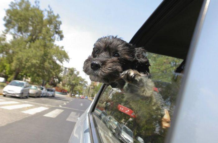 De viaje con tu mascota